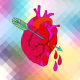 Anatomical heart with arrow. Color Anatomical heart with arrow and blood drops Stock Photos