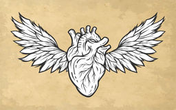 Anatomical heart with wings symbol. Royalty Free Stock Photos