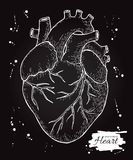 Anatomical human heart. Engraved detailed illustration. Hand dra Stock Image