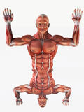 Anatomical man with his hands up Royalty Free Stock Photos