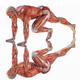 Anatomical man ready to sprint Stock Photo