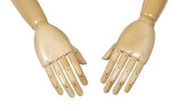 Anatomical manikin hands. Pair of flesh colored anatomical manikin hands, isolated on white background Royalty Free Stock Photos