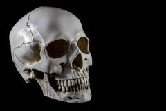 Free Anatomical Model Skull - 3/v View. Isolated On Black Background Stock Photography - 161760352