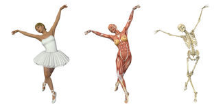 Anatomical Overlays - Ballet. A 3D render of a ballet dancer, with muscles and skeleton. These images will line up exactly, and can be used to study anatomy Royalty Free Stock Images