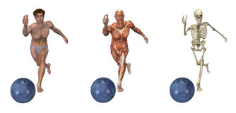 Anatomical Overlays - Bowling. Anatomical overlays depicting a man bowling. These images will line up exactly, and can be used to study anatomy Stock Photography