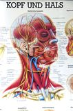 Anatomical poster Stock Photography