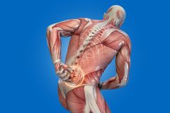 Anatomical vision back pain. 3D illustration Stock Image