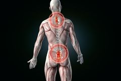 Anatomical vision back pain. Lower back pain. stock illustration