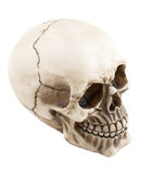 Anatomically correct medical. Model of the human skull royalty free stock image