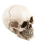 anatomically korrekt läkarundersökning Royaltyfri Bild