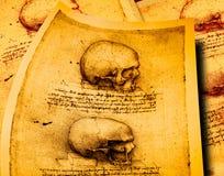 Anatomie lizenzfreie abbildung