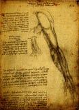 Anatomie illustration de vecteur