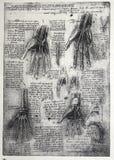 Anatomie illustration stock