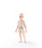 Anatomie d'enfants avec le squelette Photographie stock libre de droits