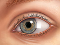 Anatomie d'oeil Photo libre de droits
