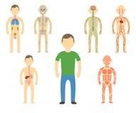 Anatomie de corps d'homme de bande dessinée Images stock