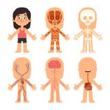 Anatomie de corps de fille de bande dessinée Veines de femme, organes et diagramme de biologie de système nerveux Squelette et ap illustration libre de droits