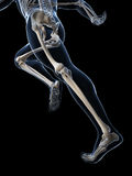 Anatomie de coureur Photo libre de droits