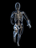 Anatomie de coureur Photos stock