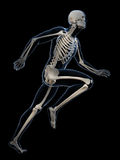 Anatomie de coureur Image libre de droits
