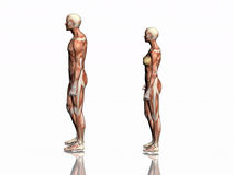 Anatomie de l'homme et de femme. illustration libre de droits