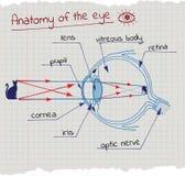Anatomie de l'oeil illustration stock