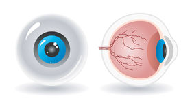 Anatomie de vecteur d'oeil humain illustration stock