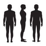 Anatomie des menschlichen Körpers, vektor abbildung