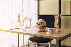 Anatomie des menschlichen Körpers der Ausrüstung umfassen Schädel, Knochen, Zähne und Gehirnmodell für Ausbildungsforschung und - stockfotografie