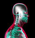Anatomie humaine Images stock