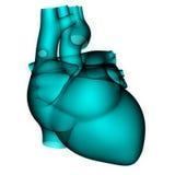 Anatomie humaine de coeur dans le balayage de rayon X illustration libre de droits