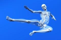 Anatomie - Kampfkünste lizenzfreie abbildung