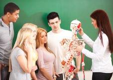 Anatomie-Klasse Stockbild