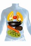 Anatomie mit Gemüse und Früchten Stockfotos