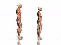 Anatomie van de mens en vrouw. vector illustratie