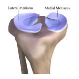 Anatomie van het kniebeen Royalty-vrije Stock Foto