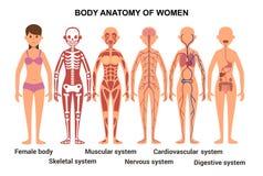 Anatomie van het Vrouwelijke Lichaam Anatomische affiche stock illustratie