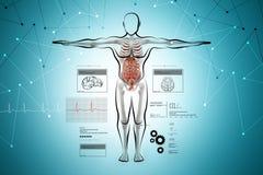 Anatomie van menselijk lichaam vector illustratie