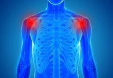 Anatomie van menselijke schouderverbindingen - verwondingsconcept Royalty-vrije Stock Foto