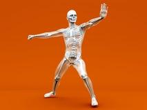 Anatomie - Vechtsporten royalty-vrije illustratie