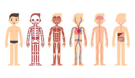 Anatomiediagramm
