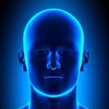 Anatomiehoofd - Front View - Blauw concept stock illustratie