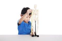 anatomii chłopiec istota ludzka uczy się Obrazy Royalty Free