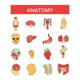 Anatomii ilustracja, cienkie kreskowe ikony, liniowi płascy znaki, wektorowi symbole royalty ilustracja