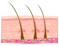 anatomii skóra Fotografia Stock