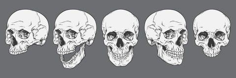 Anatomisch korrekte menschliche Schädel eingestellt lokalisiert Hand gezeichnet vektor abbildung
