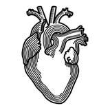 Anatomisch vrij, vrij svgdossier van harthand getrokken Crafteroks svg, eps, dxf, vector, embleem, silhouet, pictogram, onmiddell stock illustratie