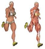 Anatomischer Bodybuilderbetrieb Lizenzfreies Stockfoto