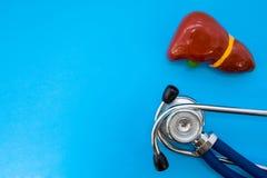 Anatomisches Studienmodell der Leber oder hepar und Stethoskop auf blauem Hintergrund besetzen Hälfte des Fotos, im zweiten halb  stockfotografie