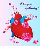 Anatomisk mänsklig hjärta med blommor också vektor för coreldrawillustration vektor illustrationer